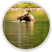 Round Beach Towel featuring the photograph Many Glacier Moose 3 by Adam Jewell