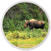 Round Beach Towel featuring the photograph Many Glacier Moose 5 by Adam Jewell