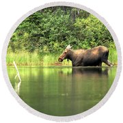 Round Beach Towel featuring the photograph Many Glacier Moose 6 by Adam Jewell