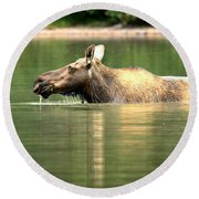 Round Beach Towel featuring the photograph Many Glacier Moose 7 by Adam Jewell