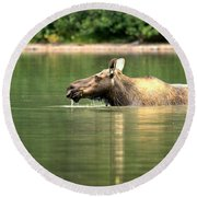 Round Beach Towel featuring the photograph Many Glacier Moose 8 by Adam Jewell