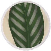 Maranta Porteana Round Beach Towel by English School
