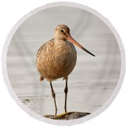 Marbled Godwit - Beauty Round Beach Towel