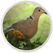 Round Beach Towel featuring the photograph Marigold Dove by Debbie Portwood