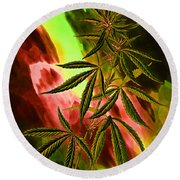 Marijuana Cannabis Plant Round Beach Towel
