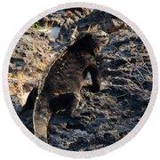 Marine Iguana, Amblyrhynchus Cristatus Round Beach Towel