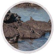 Marine Iguanas And Sealion Pup At Punta Espinoza Fernandina Island Galapagos Islands Round Beach Towel