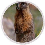 Round Beach Towel featuring the photograph Marmot by Gary Lengyel