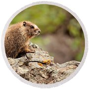 Round Beach Towel featuring the photograph Marmot by Lana Trussell