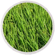 Marsh Grasses Round Beach Towel