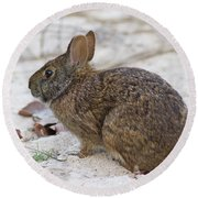Marsh Rabbit On Dune Round Beach Towel