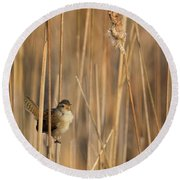 Marsh Wren Round Beach Towel