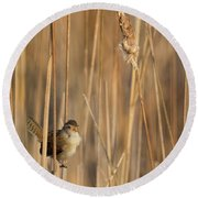 Marsh Wren Square Round Beach Towel