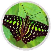 Marvelous Malachite Butterfly 2 Round Beach Towel
