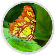 Marvelous Malachite Butterfly Round Beach Towel