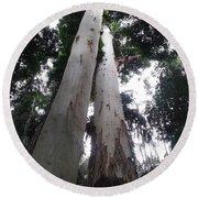 Mary Cairncross Rainforest  Round Beach Towel