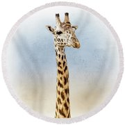 Masai Giraffe Closeup Square Round Beach Towel