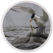 Round Beach Towel featuring the photograph Mating Pair 2 by Werner Padarin