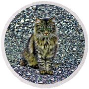 Mattie The Main Coon Cat Round Beach Towel