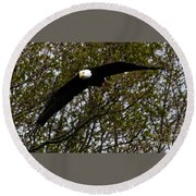 Mature Bald Eagle Round Beach Towel