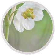 Mayapple Flower Round Beach Towel