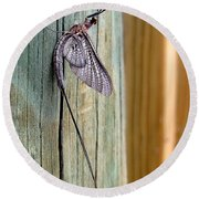 Mayfly 001 Round Beach Towel
