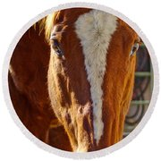 Mccool, Grandson Of Secretariat Round Beach Towel