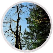 Round Beach Towel featuring the photograph Mcguire Trees by Jerry Sodorff