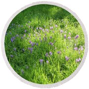 Meadow Abundance - Delicate Crocuses And Grass Blades In The Sunshine Round Beach Towel