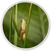 Round Beach Towel featuring the photograph Meadow Grasshopper by Jouko Lehto