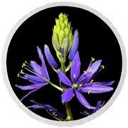 Meadow Hyacinth 002 Round Beach Towel by George Bostian