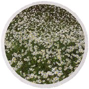 Round Beach Towel featuring the photograph Meadow Of Daisey Wildflowers Panorama by James BO Insogna