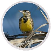 Meadowlark Beauty Round Beach Towel