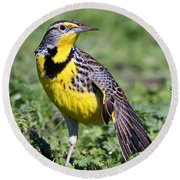 Meadowlark On The Runway Round Beach Towel