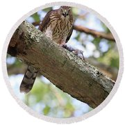 Mean Hawk At Dinner Time Round Beach Towel