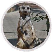 Meerkat 2 Round Beach Towel