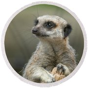 Meerkat Model Round Beach Towel