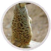 Meerkat Portrait Round Beach Towel by Carlos Caetano