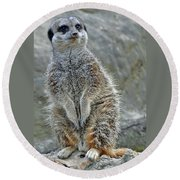 Meerkat Poses Round Beach Towel