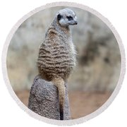 Meerkat Sitting And Looking Right Round Beach Towel