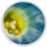 Metallic Green Bee In Blue Morning Glory Round Beach Towel