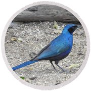 Round Beach Towel featuring the photograph Meve's Starling by Betty-Anne McDonald