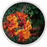 Mexican Bird Of Paradise Round Beach Towel by Robert Bales