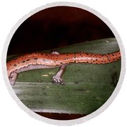 Mexican Palm Salamander Round Beach Towel
