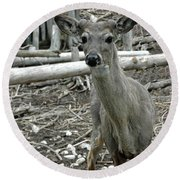 Round Beach Towel featuring the photograph Michigan White Tail Deer by LeeAnn McLaneGoetz McLaneGoetzStudioLLCcom