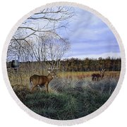 Take Out - Deer Round Beach Towel