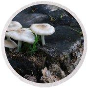 Mid Summers Fungi Round Beach Towel