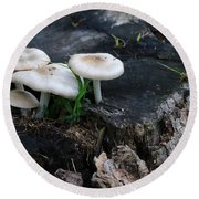 Round Beach Towel featuring the photograph Mid Summers Fungi by Rick Morgan