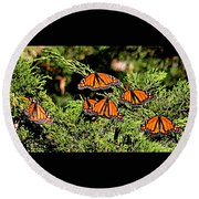 Round Beach Towel featuring the photograph Migrating Monarchs by AJ Schibig