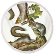 Migratory Squirrel Round Beach Towel